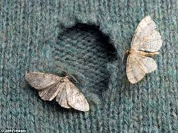 moth_eaten_clothes